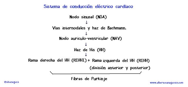 sistema de conducción eléctrico del corazón