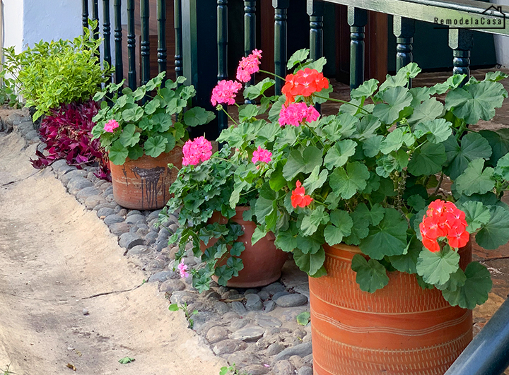 flowers in terracotta pots