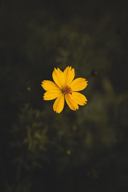 أجمل خلفية زهرة صفراء