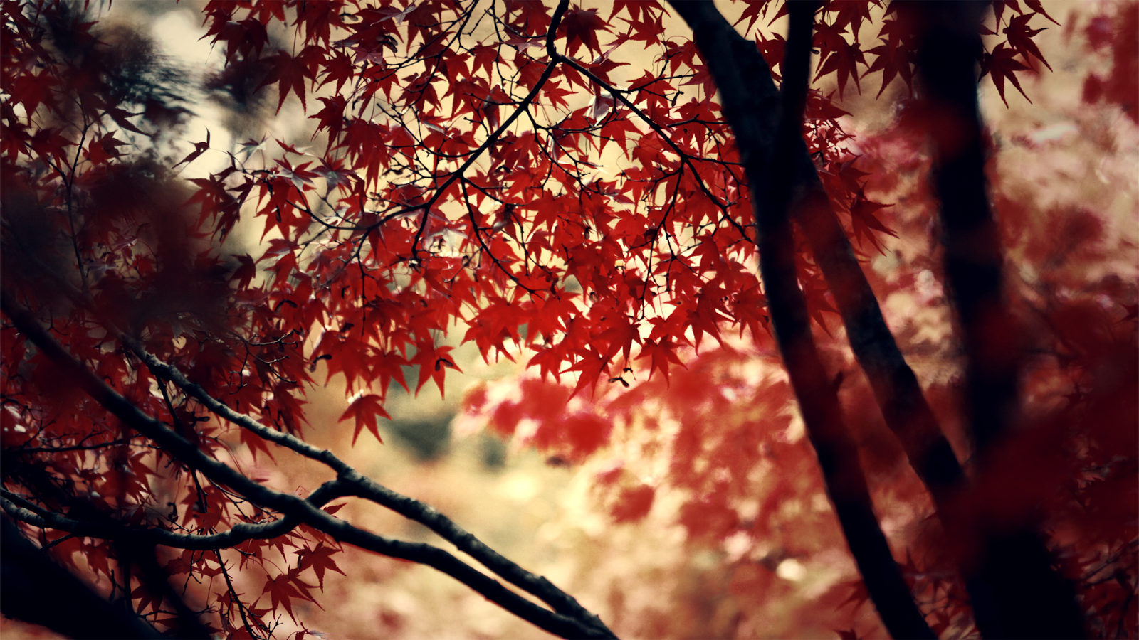 Colored Trees Wallpapers