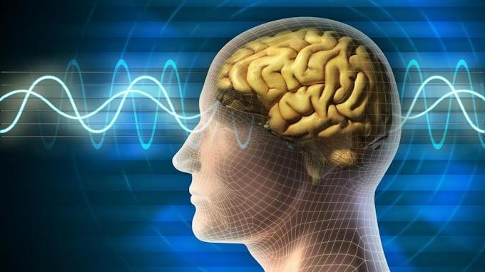 تخزين المعلومات للدماغ بدأت تظهر في الواقع في ابحاث جديدة ...