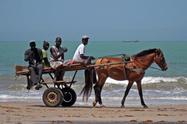 Culture, histoire, charrette, cheval, animal, travaux, chantiers, transport, urbain, rural, activités, économique, LEUKSENEGAL, Dakar, Sénégal, Afrique