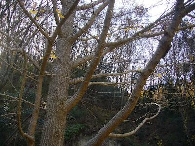ほしだ園地・星のブランコ ウォーキング 銀杏の落ち葉祭り