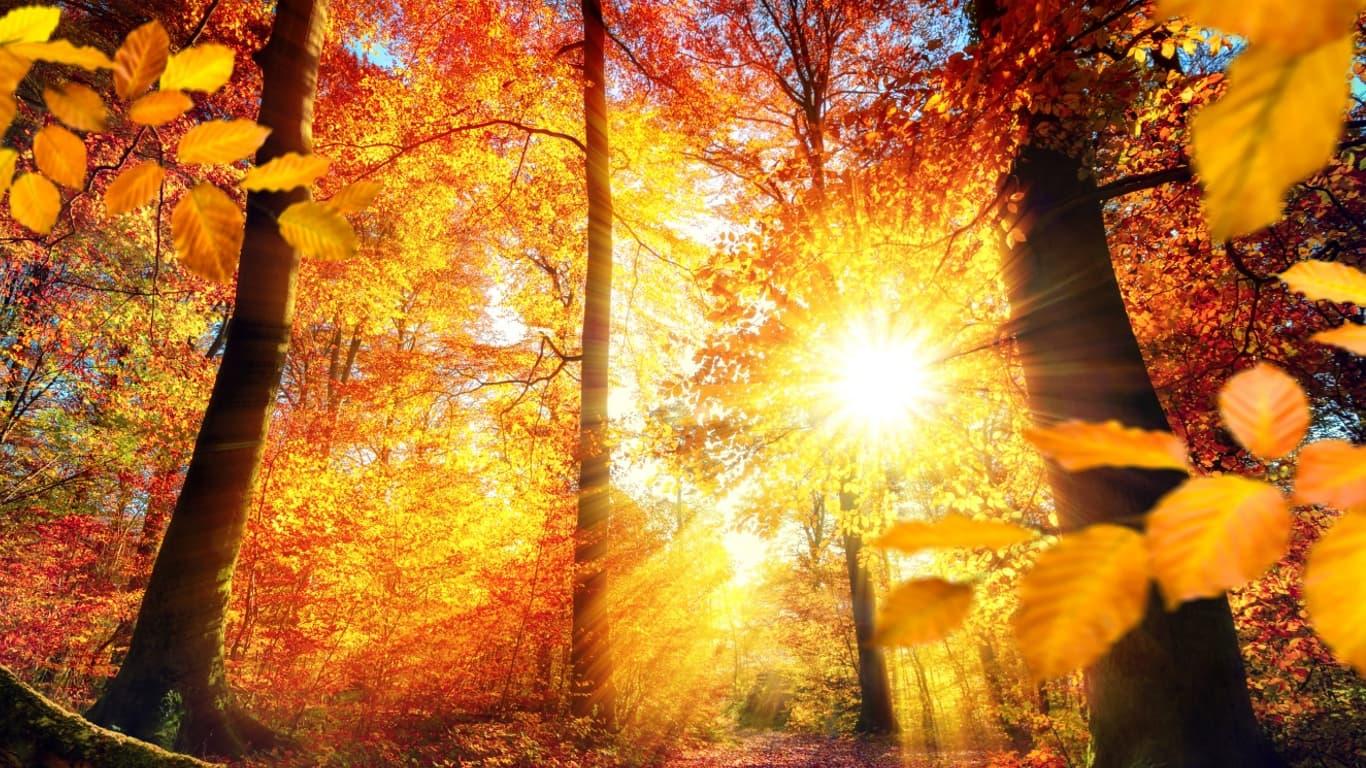 Wallpaper per PC 1366x768, autunno in Germania