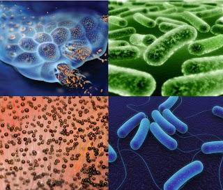 que son las bacterias virus hongos y parasitos