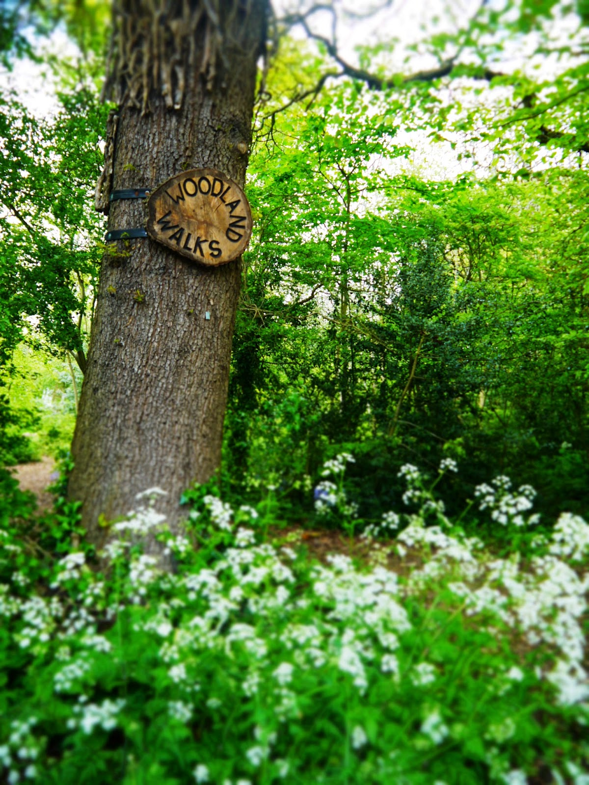 University of Bath Woodland Walks