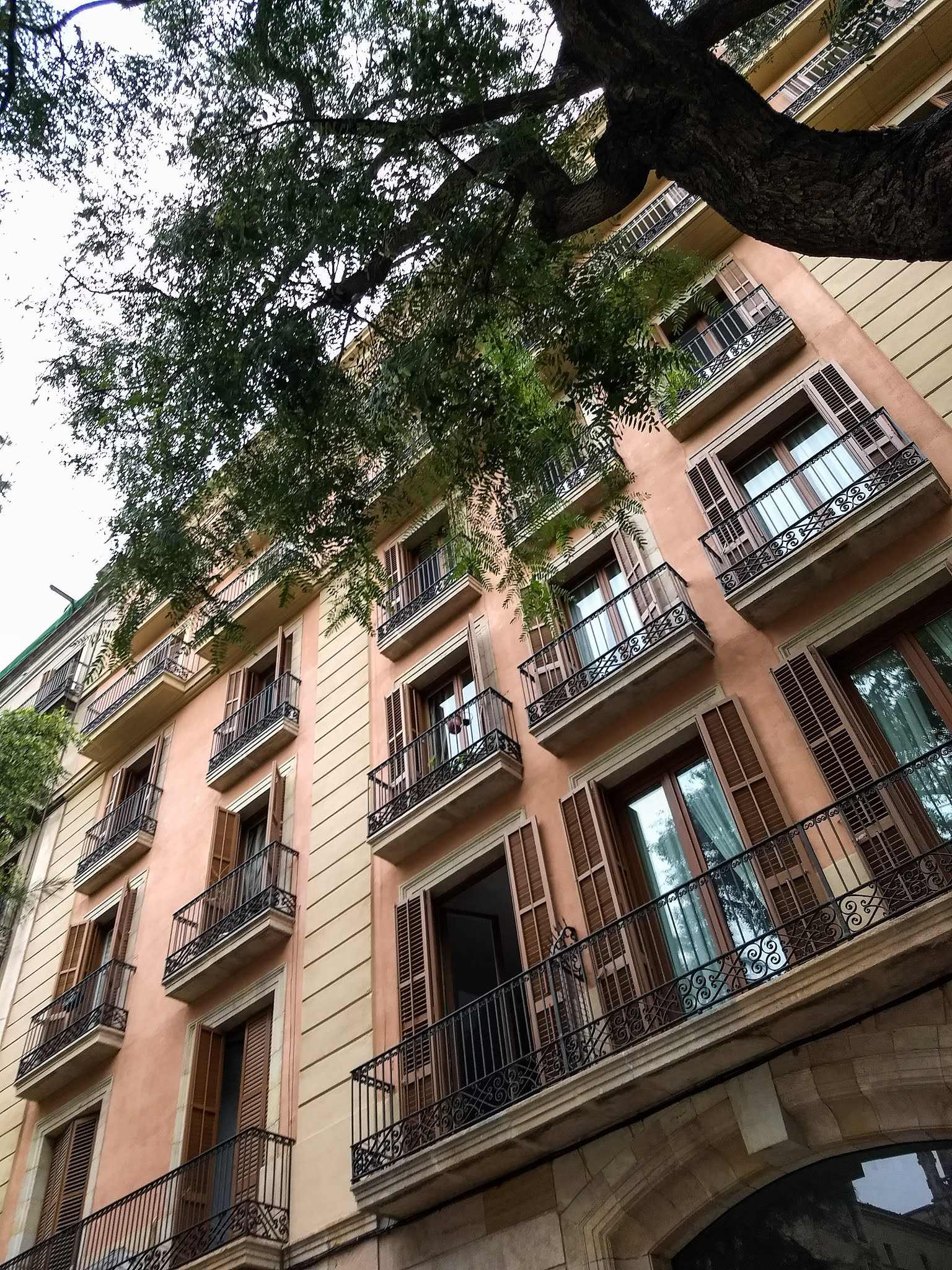 Looking up at a building under a tree on the Rambla de Catalunya in Barcelona.