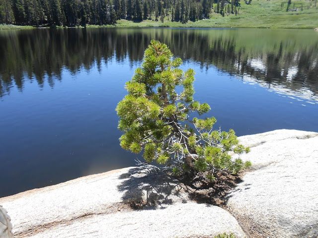 conifer, tree, lake, rock