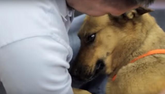 Собака потерялась, но хозяйка не прекращала ее поиски