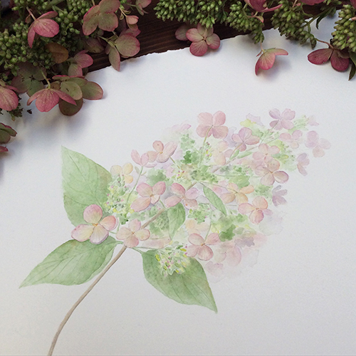 A print of this hydrangea painting is available