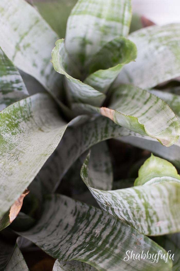 bromeliads in a pot