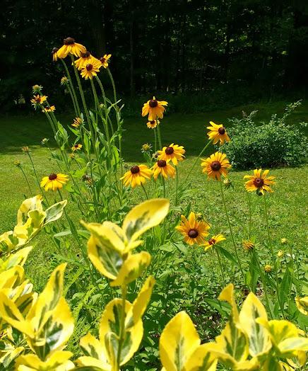 Summer in The Spice Garden