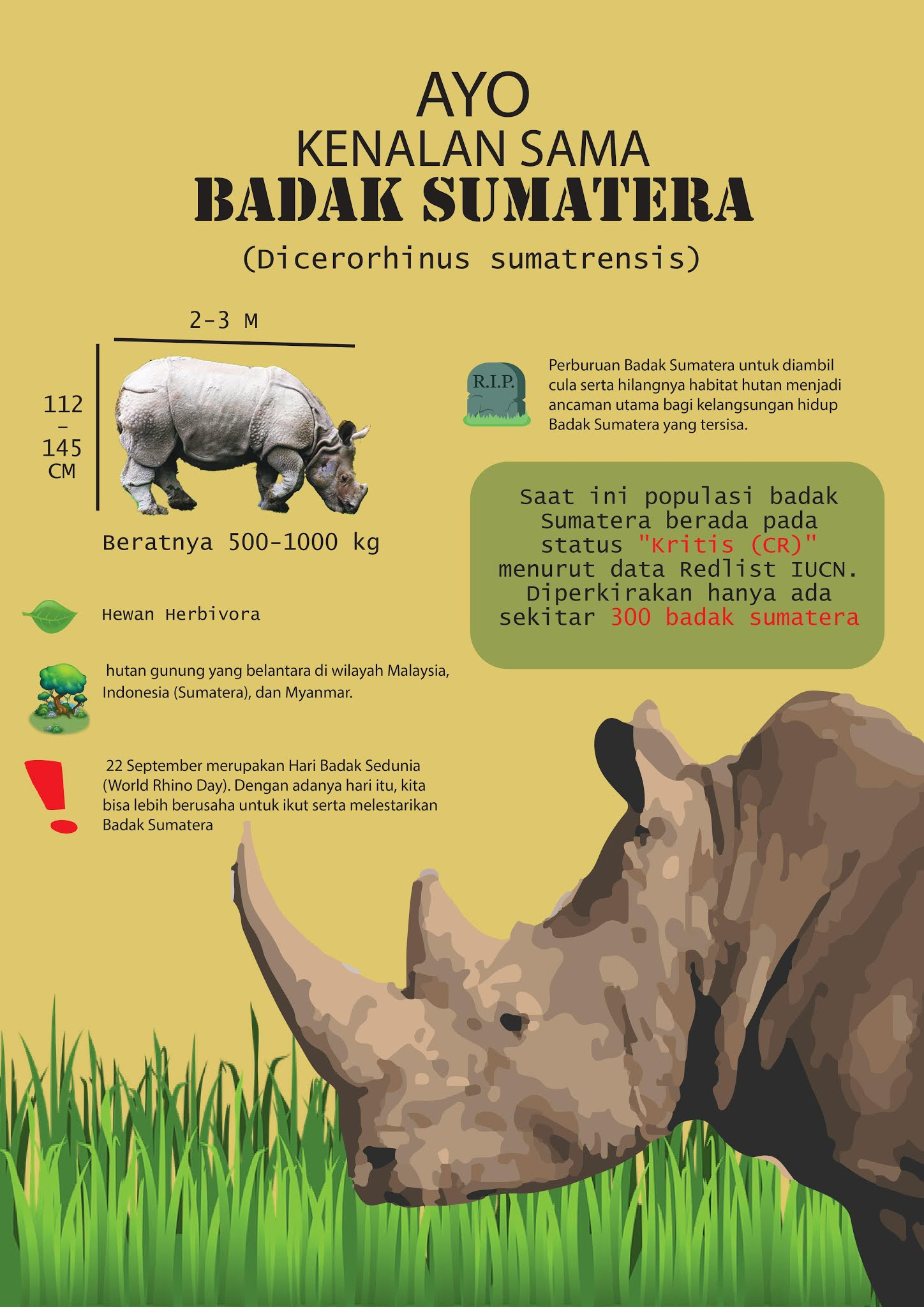 Ayo Kita Kenalan Sama Badak Sumatera Petualangan Kata