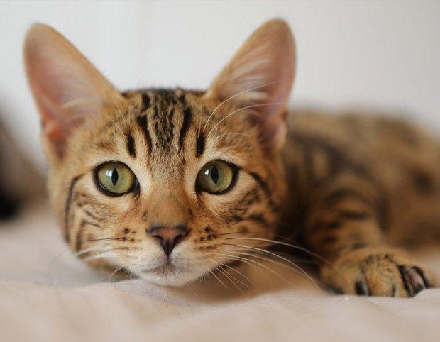 Bélgica confirma primeiro caso de coronavírus em animal doméstico transmitido pelo dono