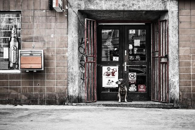 pies przed sklepem