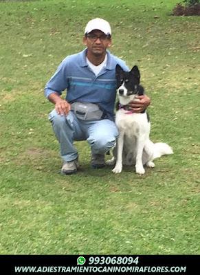 Adiestramiento Canino Barranco