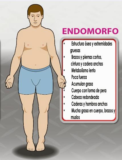 Dieta y entreno para endomorfos - Culturismo total