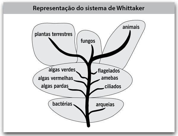fatec-2018-representacao-do-sistema-whittaker