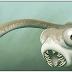 Evolução paralela confirmada nesses estranhos vertebrados primitivos
