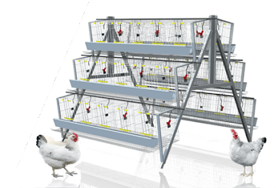 Cage system poultry