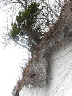 Abbruchkante am Kreidefelsen Stubbenkammer, Königsstuhl auf Rügen