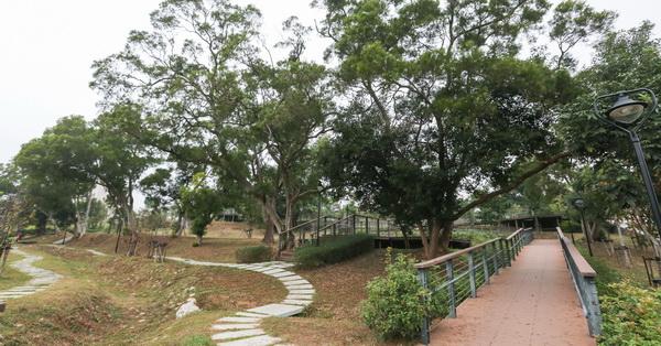 台中沙鹿|公館公園-整排相思樹還有大樟樹,開滿花的馬纓丹