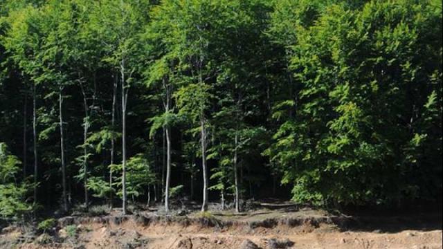 Έως την Παρασκευή 20 Αυγούστου η απαγόρευση κυκλοφορίας σε δάση, εθνικούς δρυμούς, περιοχές Natura και άλση