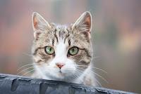 gato-vega-conhecimentos