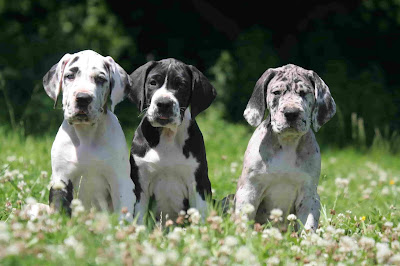 black and white dog names,  names for black and white dogs