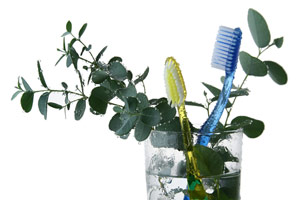 Dental Care Herbs