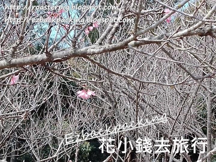 大帽山扶輪公園櫻花2021