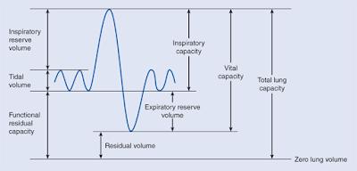 gafacom image - Lung Capacity
