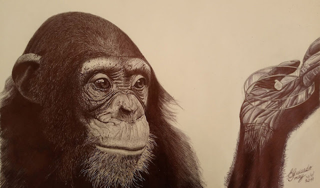How human brain development diverged from great apes