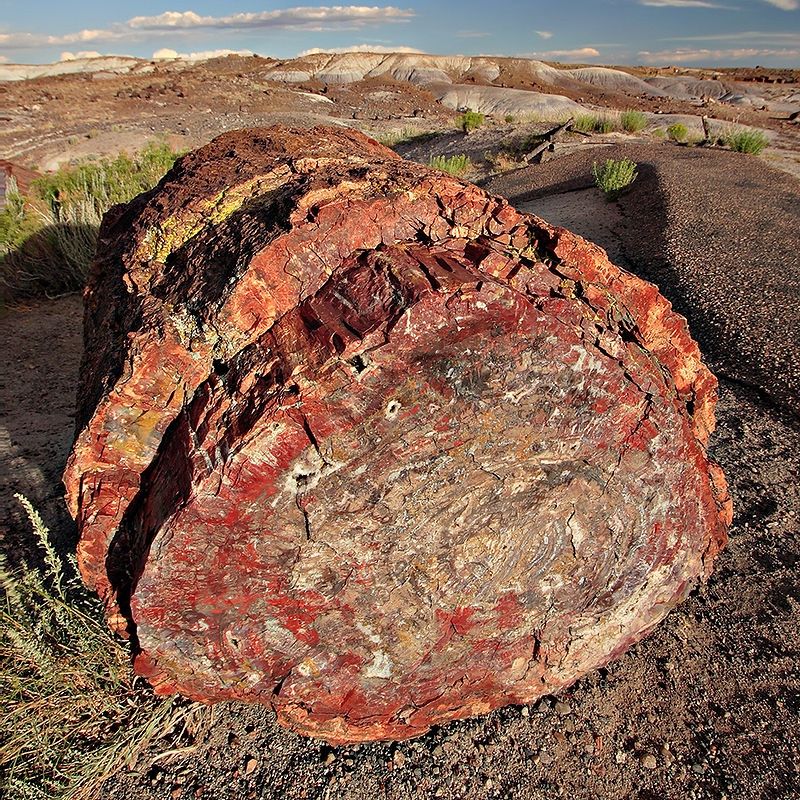 Petrified Forest National Park Navajo and Apache County 7