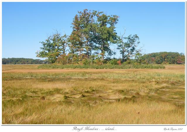 Rough Meadows: ... islands...