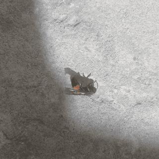 Tawon-lebah