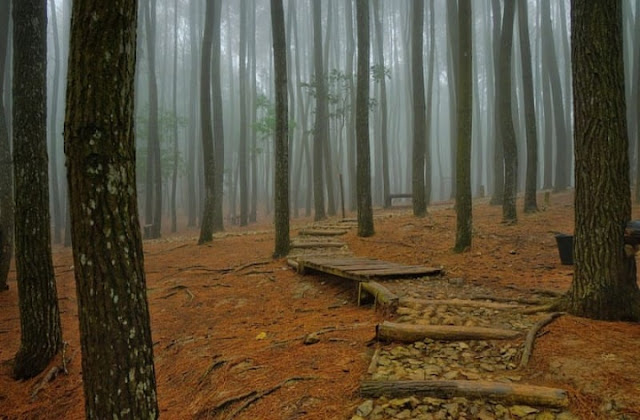 hutan pinus jogja 2020, hutan pinus mangunan jogja 2020, hutan pinus mangunan magelang 2020, tiket masuk hutan pinus jogja 2020, rute hutan pinus mangunan, hutan pinus terdekat, hutan pinus pengger, harga tiket masuk hutan pinus mangunan 2020, pengalaman ke hutan pinus mangunan, pengelolaan hutan pinus mangunan