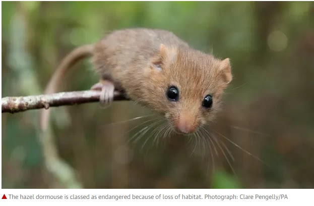 Quarter of native UK mammals at approaching danger of extinction First professional