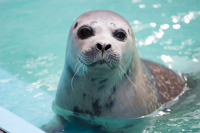 Natureland Seal Sanctuary in Skegness || Pictures & Review!