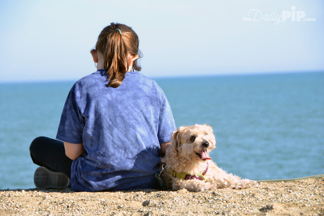 A dog and his girl by Lake Michigan pretending it is the sea