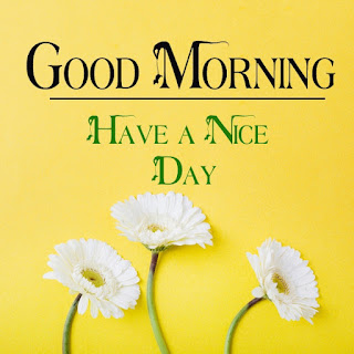 Good Morning Royal Images Download for Whatsapp Facebook18