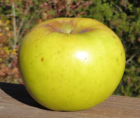 A green-yellow apple