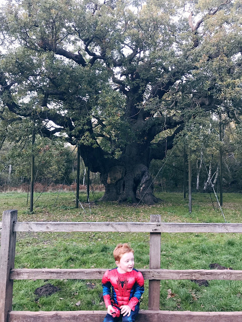 Little boy sitting on a fence in front of the major oak tree