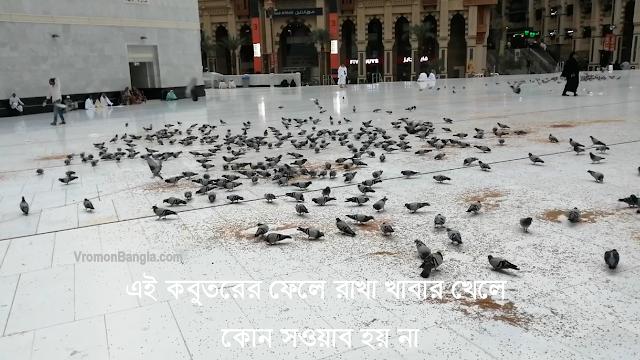 pigeons in makkah,