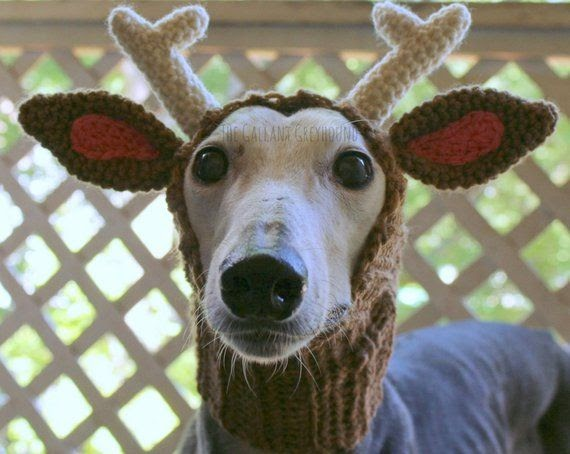 Greyhounds, Reindeer, and Goats