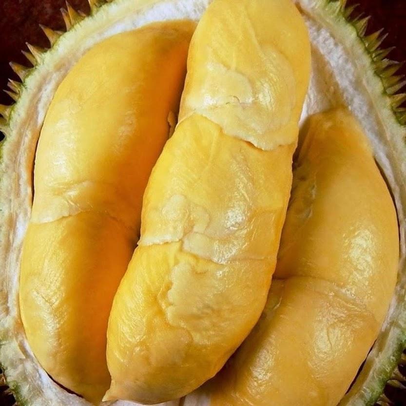 Bibit Durian Bawor Ternate