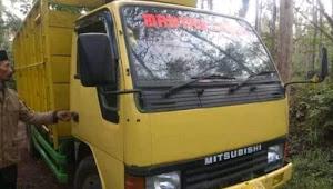 Pencuri sapi bawa truk kabur, kepergok warga di Tiris