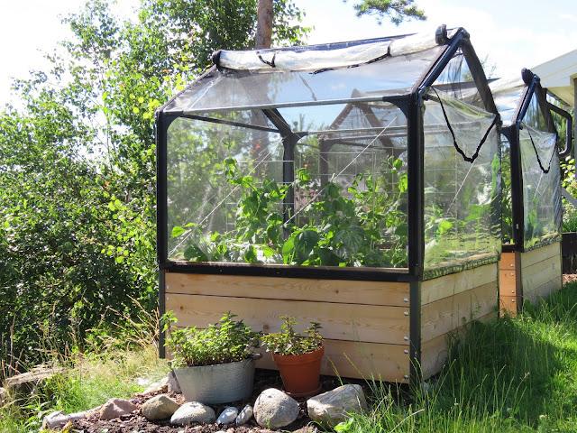 Gleden ved å høste inn grønnsaker fra drivhus og pallekarmer