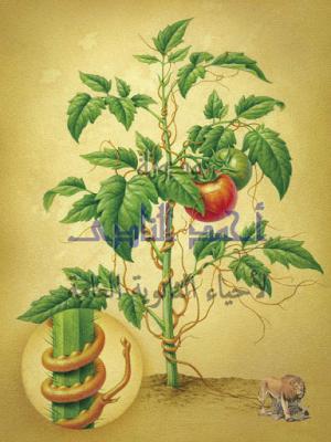 المناعة فى النبات -حماية  النبات من الأعداء - إستعمال مبيدات ضد الأعشاب الضارة مثل الهالوك