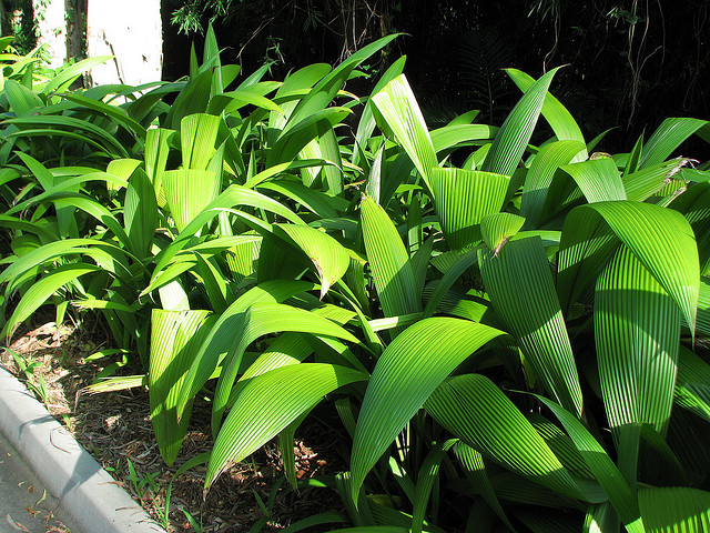 Common Tropical Plants That Can Add Variety To Your Garden
